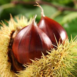 Olio alle Castagne · La novità dell'autunno